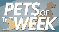 Pets of the week, featured dogs and cats